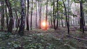 birch-forest-427007_640